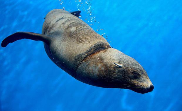 silva-seal-act-for-wildlife-web620
